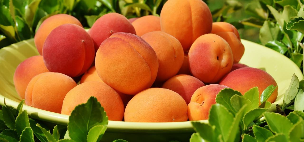 in der Obstkiste: gute Aprikosen sind tolles Saisonobst