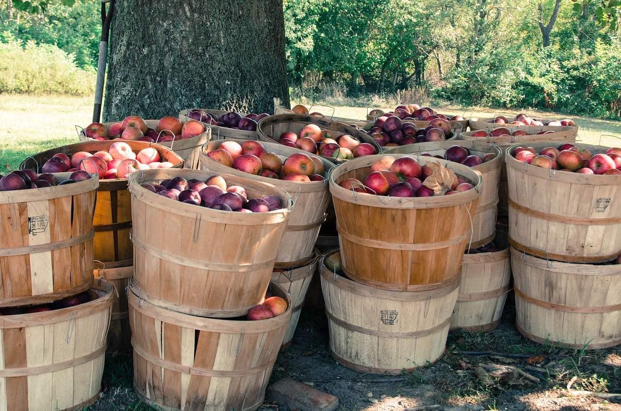 Leerer Obstkiste: das Thema Bio-Obst