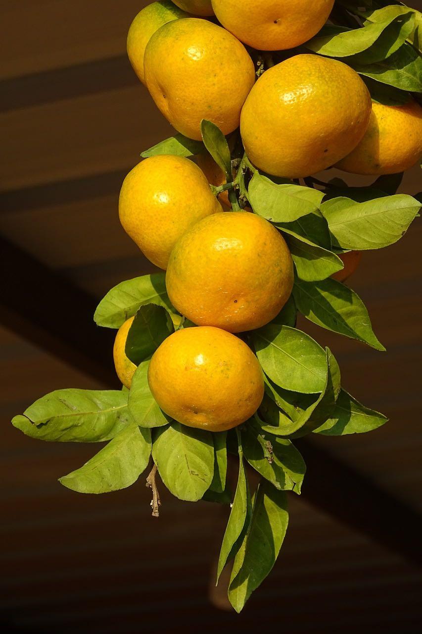 Leckerste Clementinen im Obstkorb