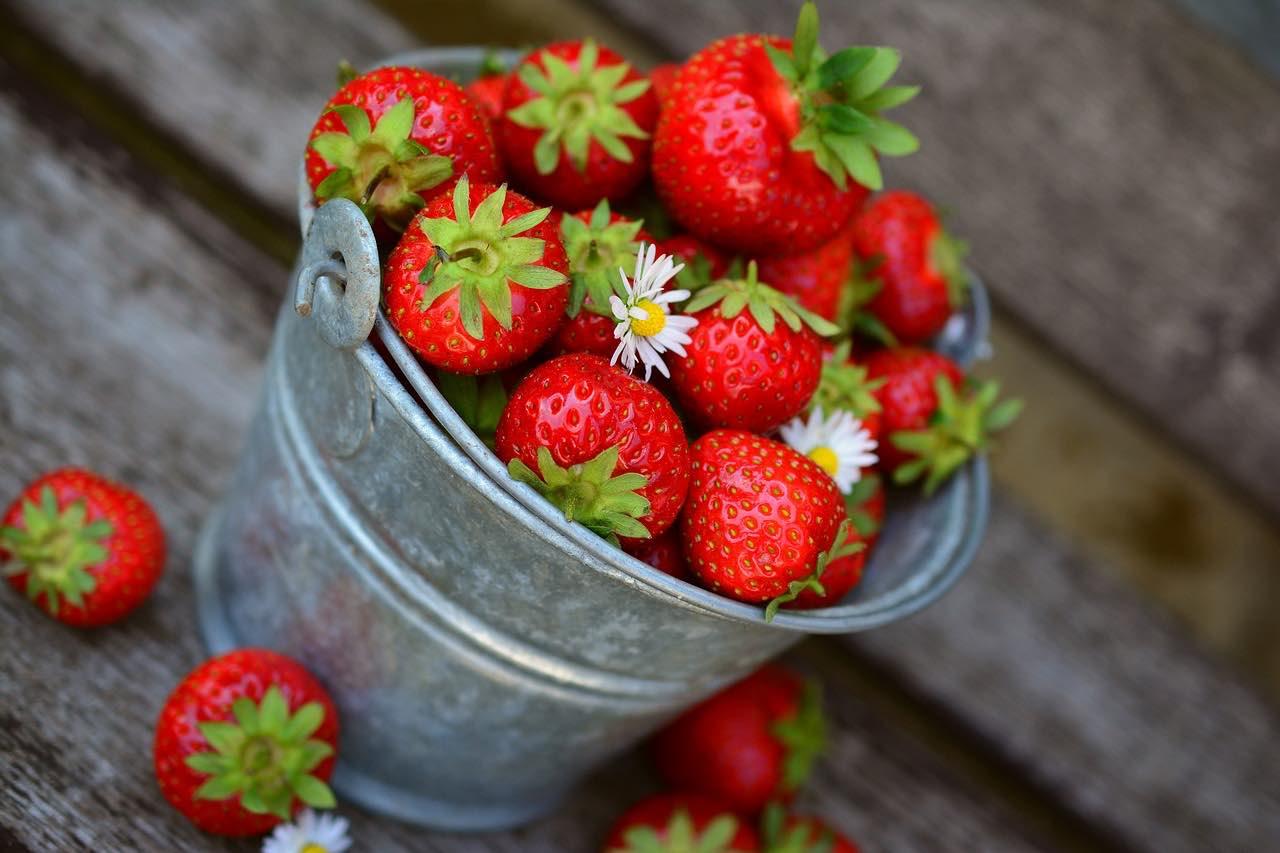 Erdbeeren in der  Muensterer Obstkiste: saftig