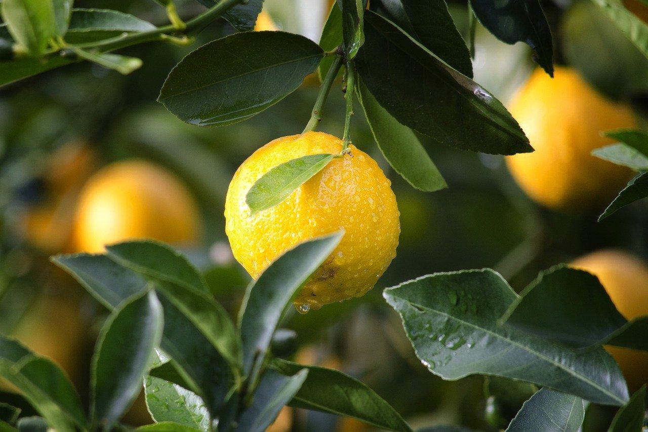 Zitronen Und Obst im <?PHP echo Hamburger;?> Lieferservice